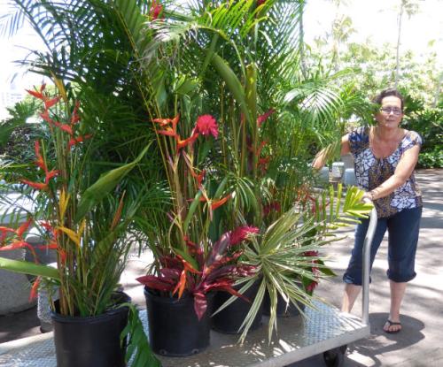 Linda Torres flowers